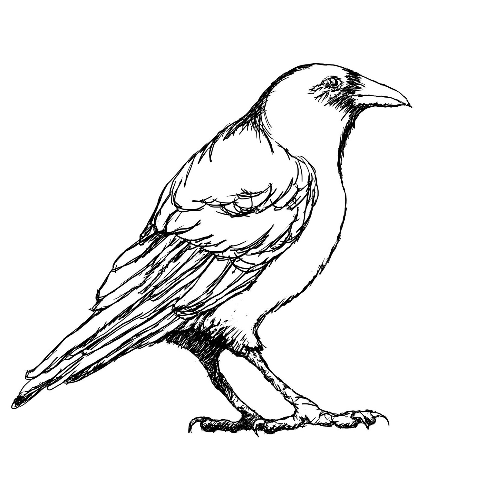 Outline Of Crow