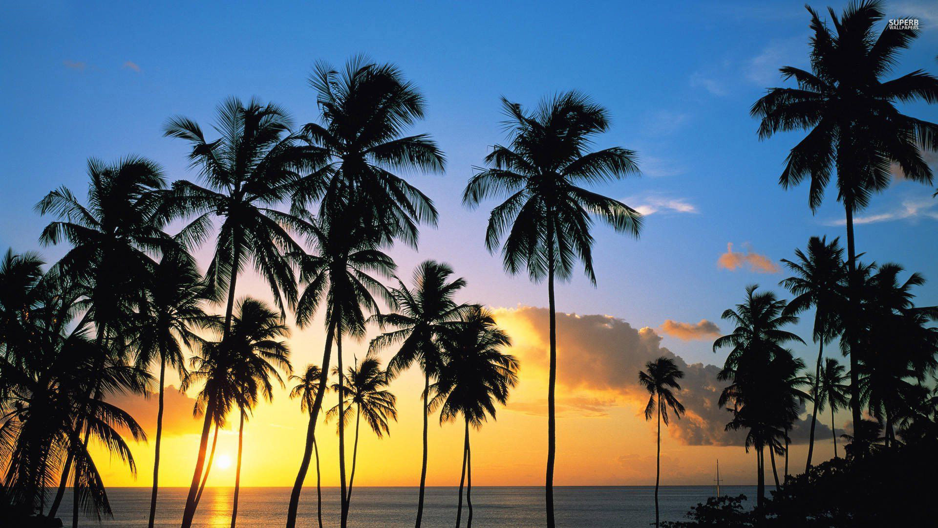 Image result for palm trees in california