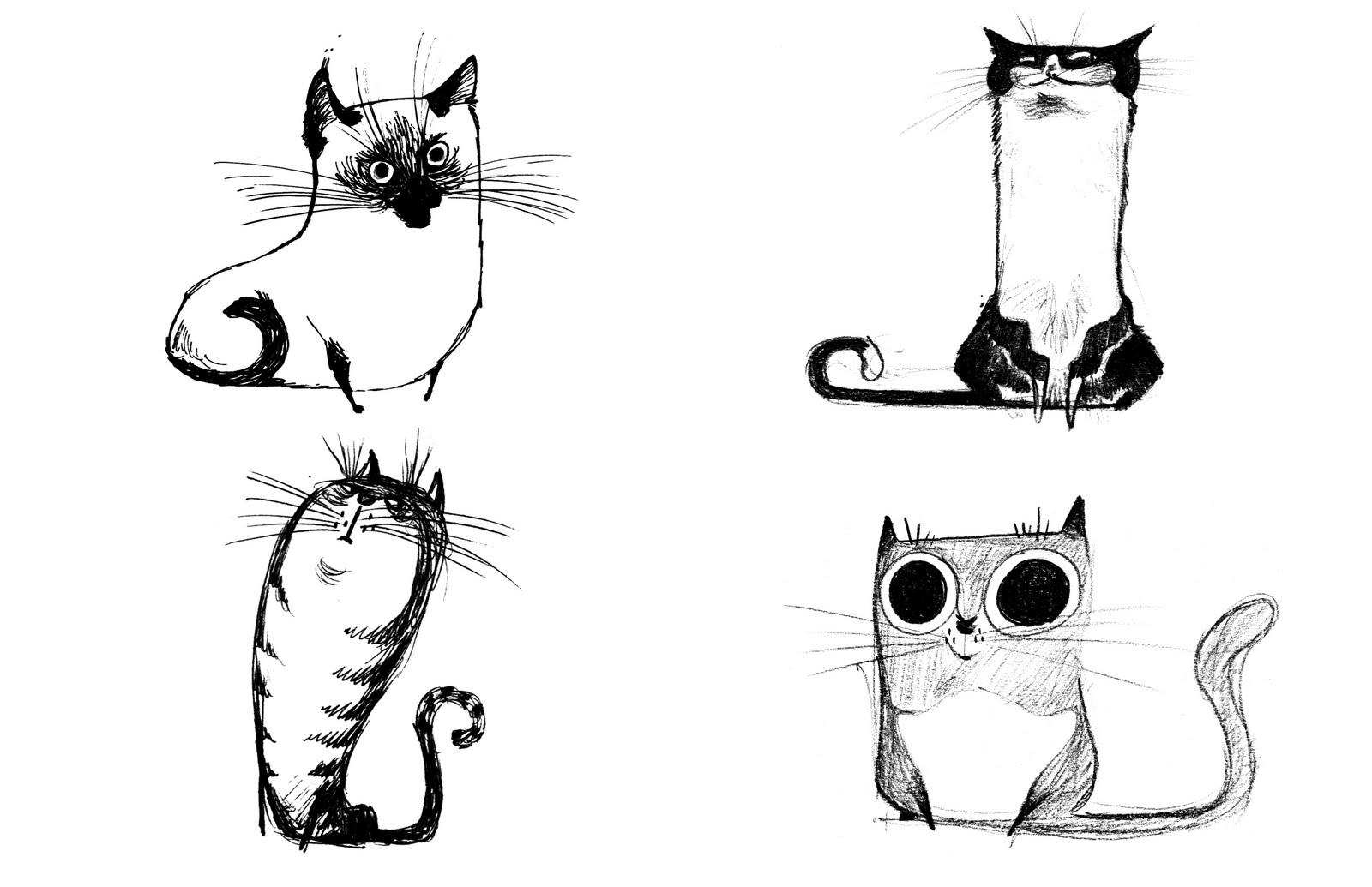 Cat Evolution All In Cats