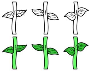 stem flower printable stems clipart template templates flowers leaves spring cliparts leaf clip pattern sunflower lesson mother plans pot daisy