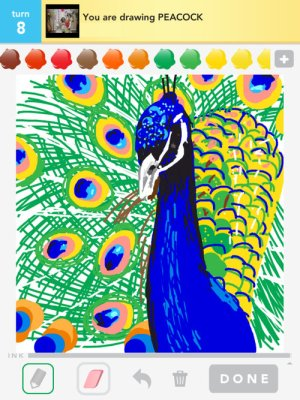 peacock drawings drawing simple colorful cliparts easy draw something clipart peafowl clip library rating