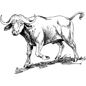 Buffalo 2 clipart, cliparts of Buffalo 2 free download