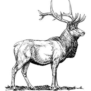 elk clipart, cliparts of elk free download (wmf, eps, emf