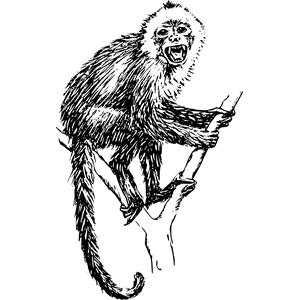 Capuchin monkey 01 clipart, cliparts of Capuchin monkey 01