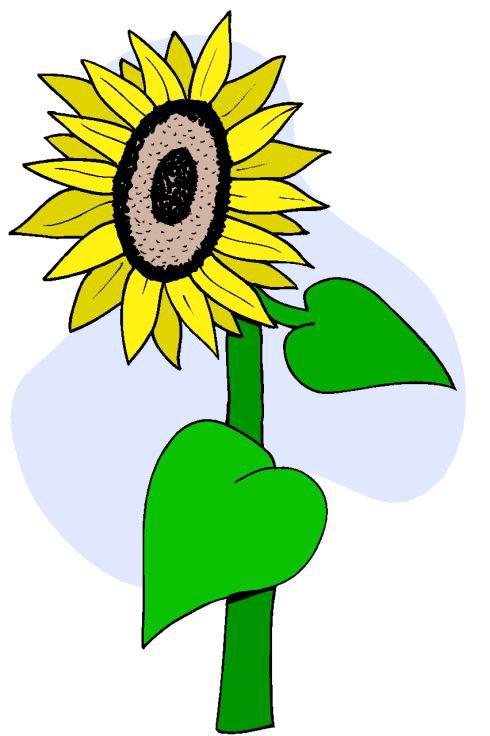 long stem sunflower clipart