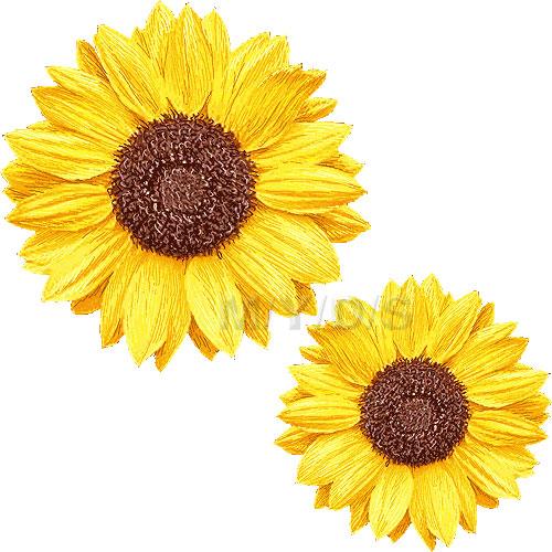 sunflower clipart 1 2 #6361