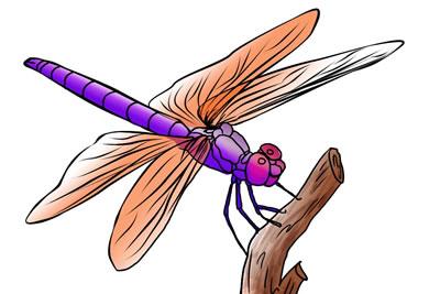 dragonfly clip art - illustrations
