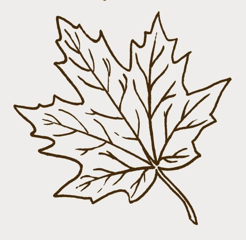 small resolution of fall leaves clip art black and white