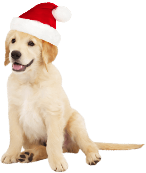 small resolution of cute dog with santa hat clipart the clipart