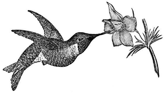 sweet hummingbird silhouette vector