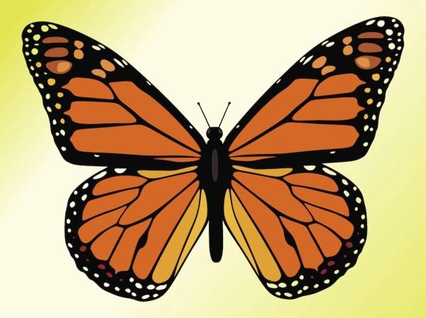 monarch butterfly clip art vectors