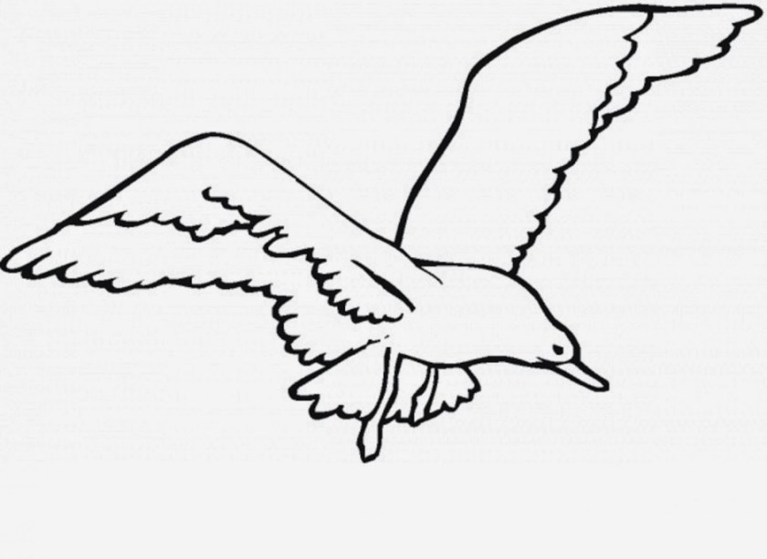 seagull clip art  images illustrations photos