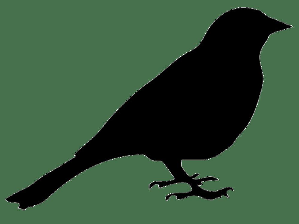medium resolution of bird silhouettes clipart clipart