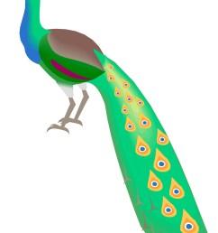 peacock clipart free clipart images 3 clipartix [ 1486 x 2054 Pixel ]