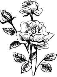 bush rose clipart plant drawing