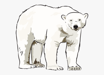 polar bear clipart clip transparent kid hd pngitem
