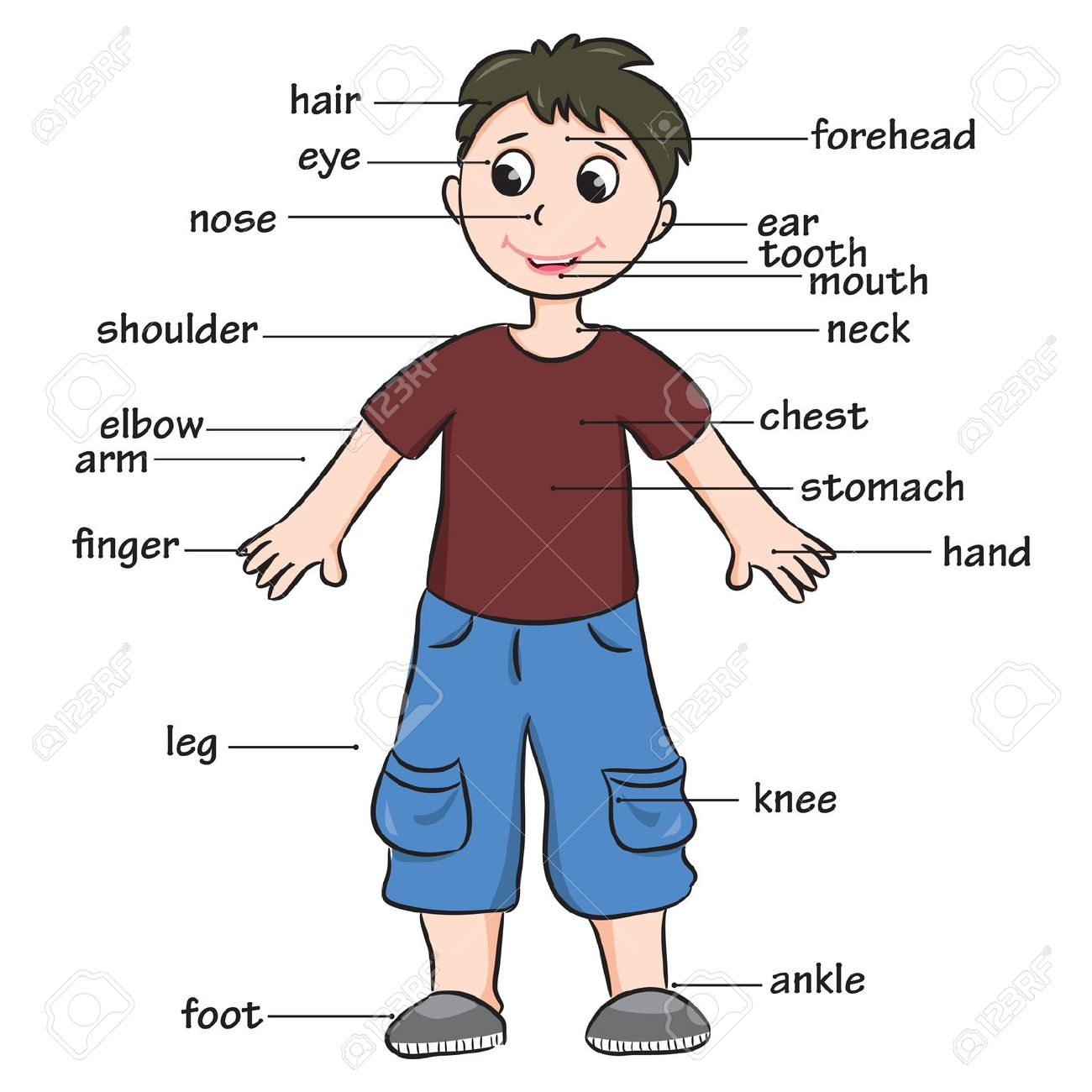 Body Parts For Kids Clipart 9 Clipart Station