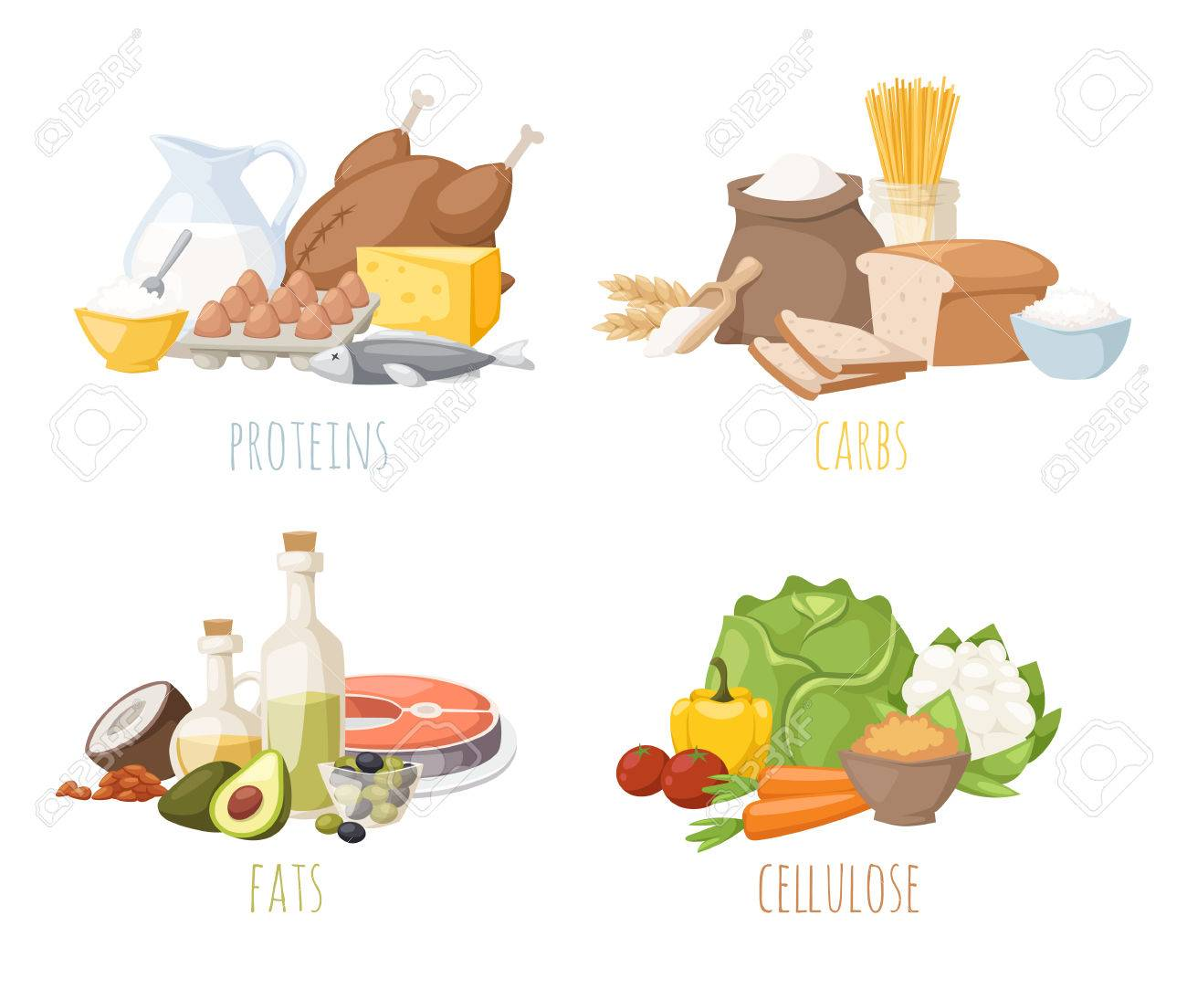 hight resolution of healthy nutrition proteins fats carbohydrates balanced diet cooking culinary and food concept vector