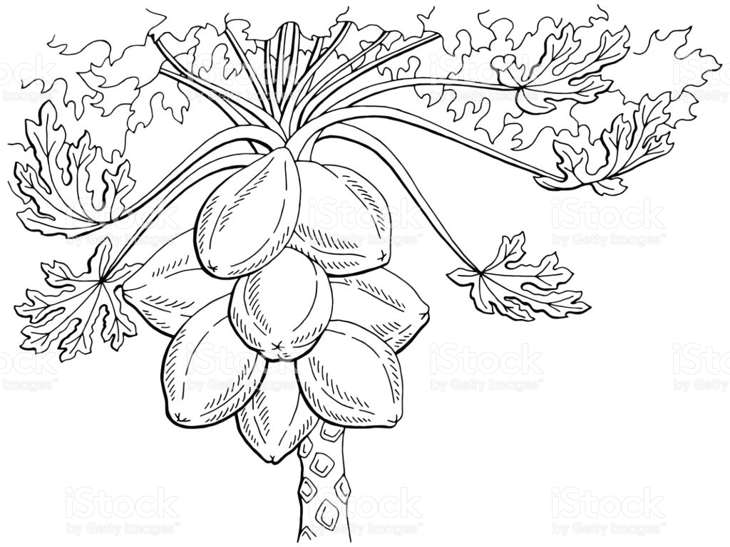 Papaya Tree Clipart Black And White 5 Clipart Station