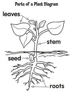 Parts of a plant clipart black and white 4 » Clipart Station