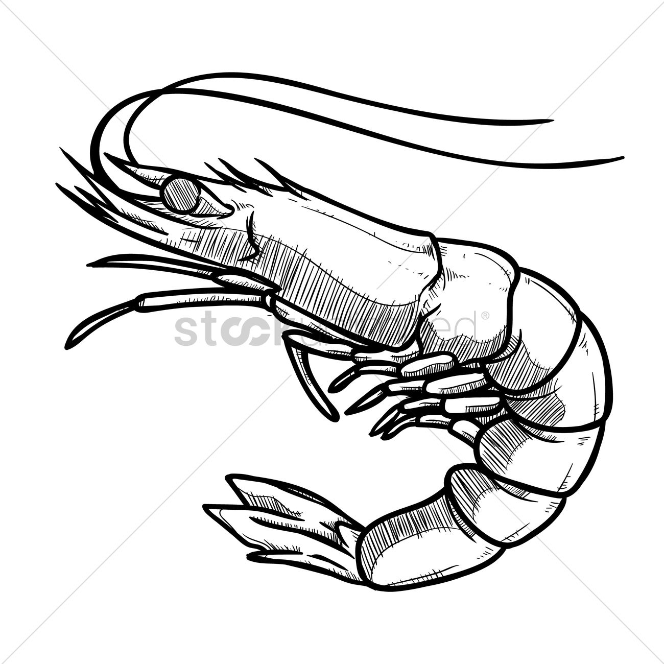 Prawn Clipart Black And White 5 Clipart Station