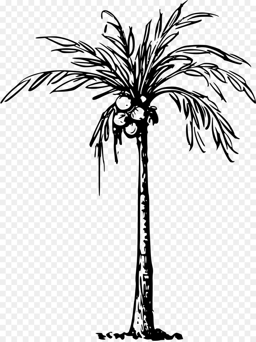 hight resolution of coconut tree black and white clipart 4