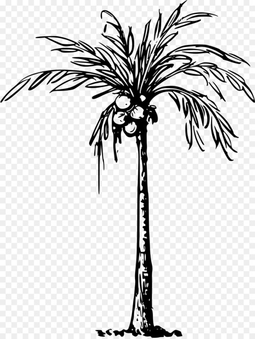 small resolution of coconut tree black and white clipart 4