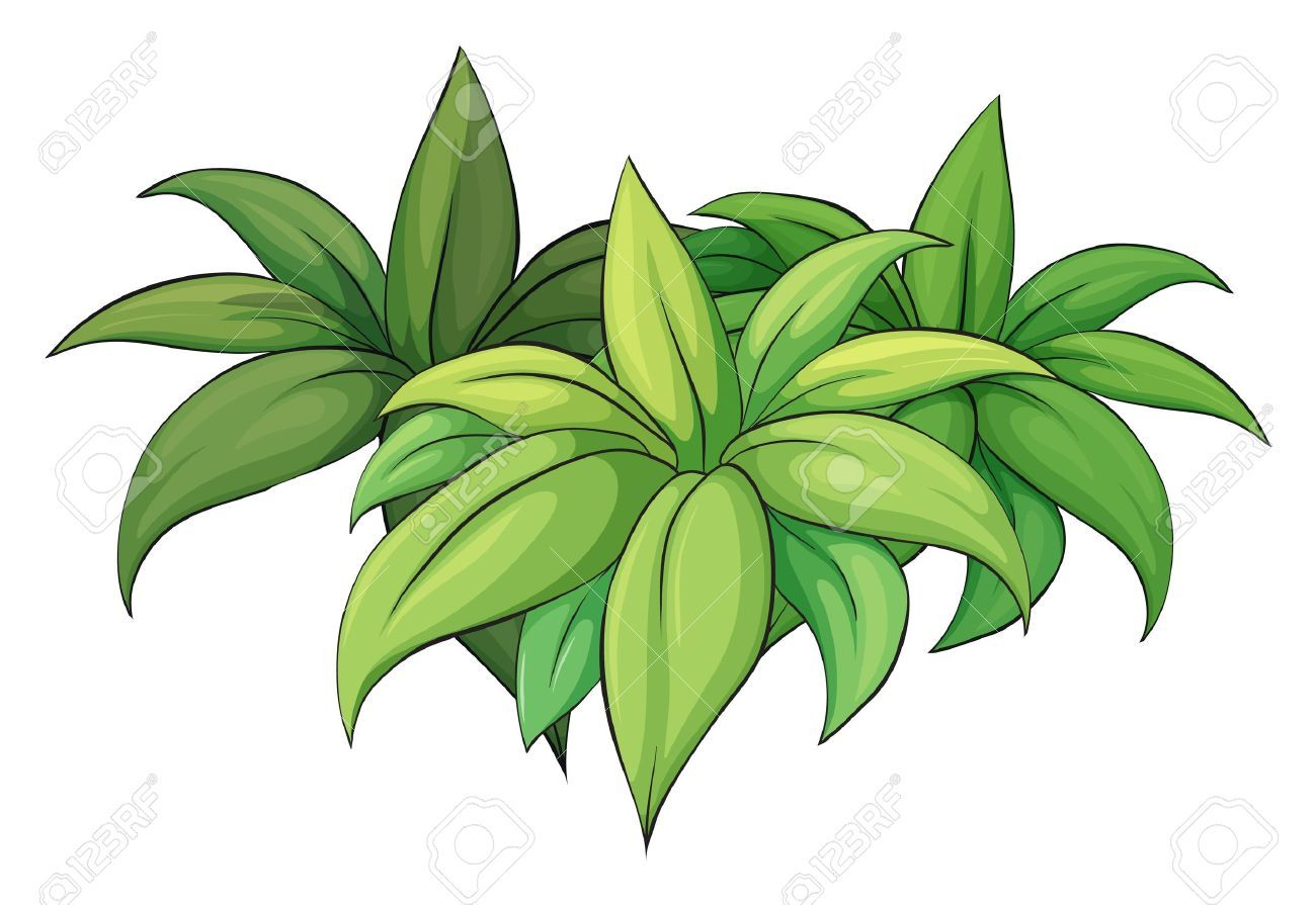 hight resolution of jungle plants clipart 4