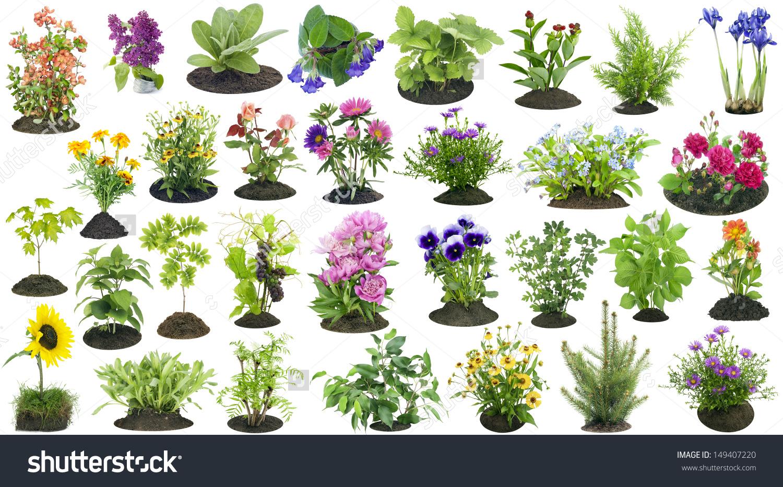A Garden Plant Clipart 21 Free Cliparts