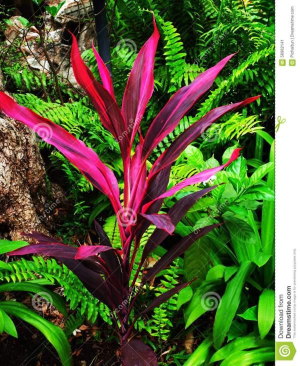 Agavaceae Clipart - Clipground
