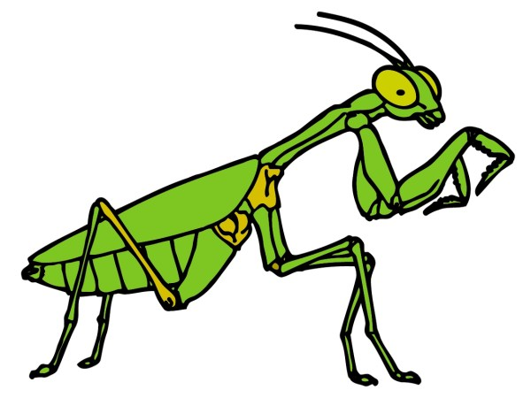 cartoon animal clipart insects