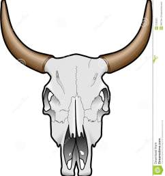 animal skull stock image image 3165301 [ 1202 x 1300 Pixel ]