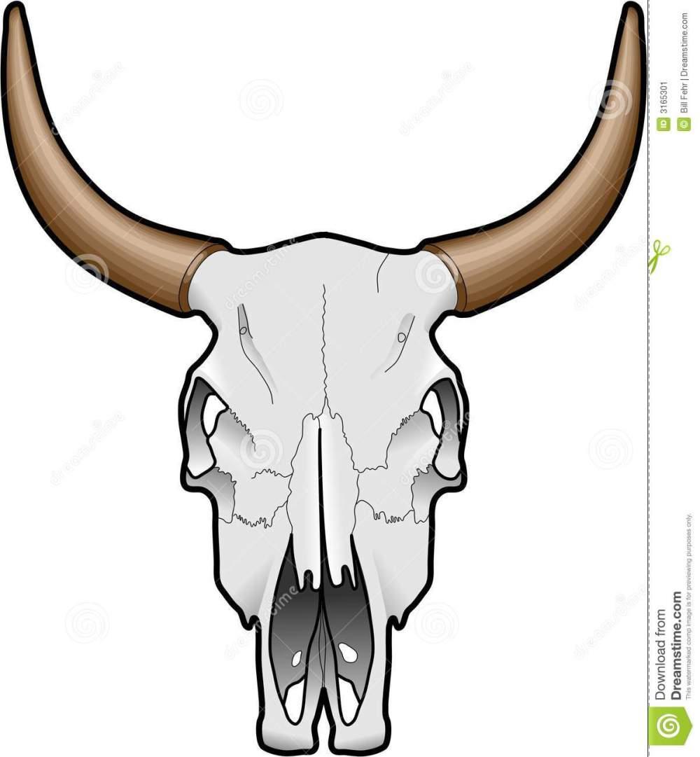 medium resolution of animal skull stock image image 3165301