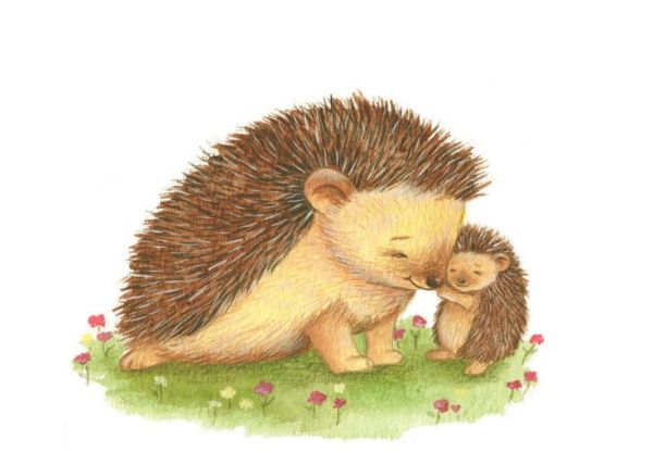 baby hedgehog clipart - clipground