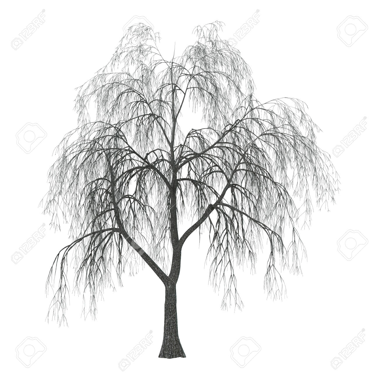 Babylon Weeping Willow Clipart 20 Free Cliparts