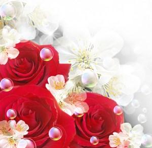 roses flowers fundo flores rose rosas vermelhas backgrounds floral brancas desenho plano fundos clipart papers transparent papel imagens paisagem
