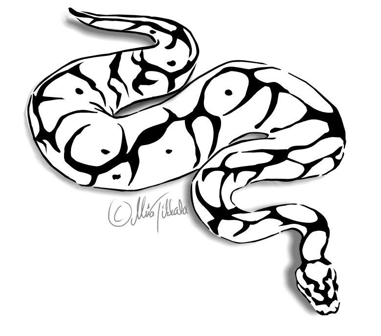 20 Ball Python E Snake Head Clip Art Ideas And Designs