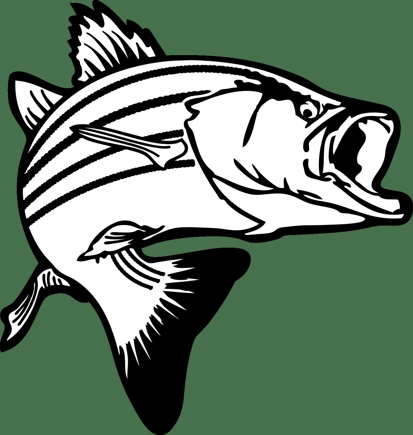 Stripe Bass Clipart 20 Free Cliparts