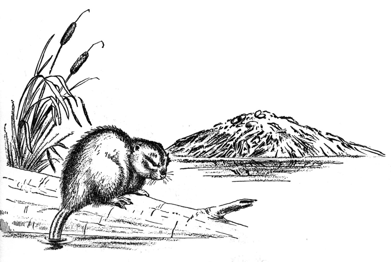 Beaver Dam Clipart
