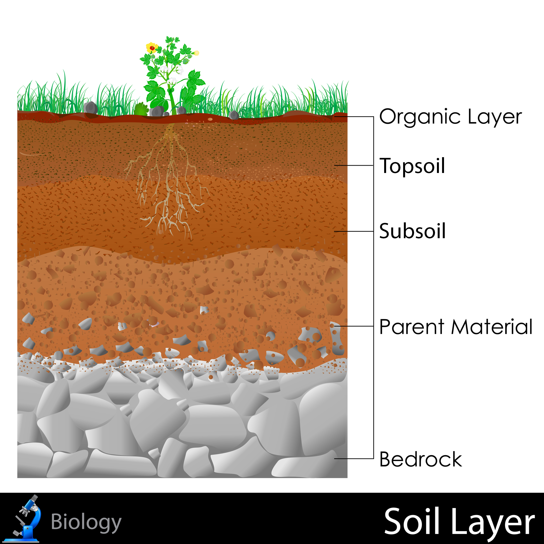 Soil Layer Clipart 20 Free Cliparts