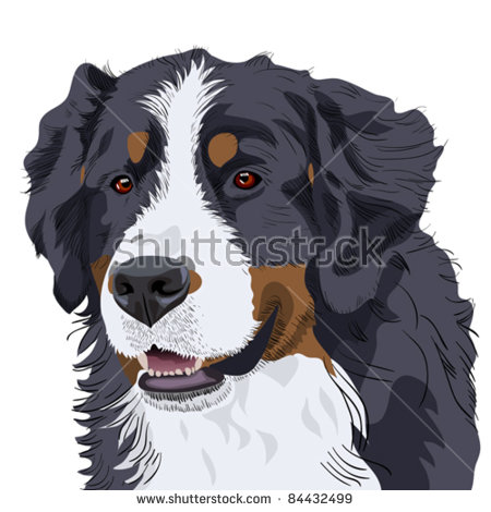 Bernese mountain dog clipart 20 free Cliparts Download