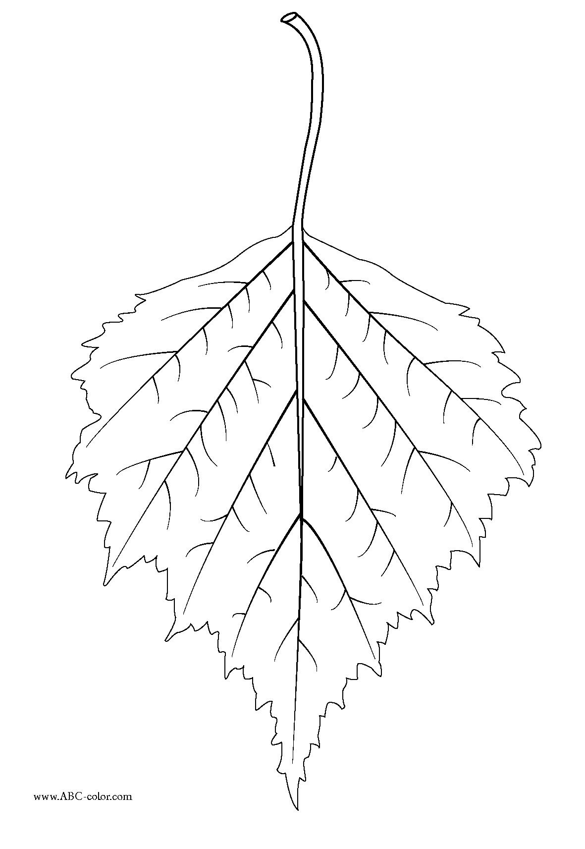 Birch Leaf Clipart