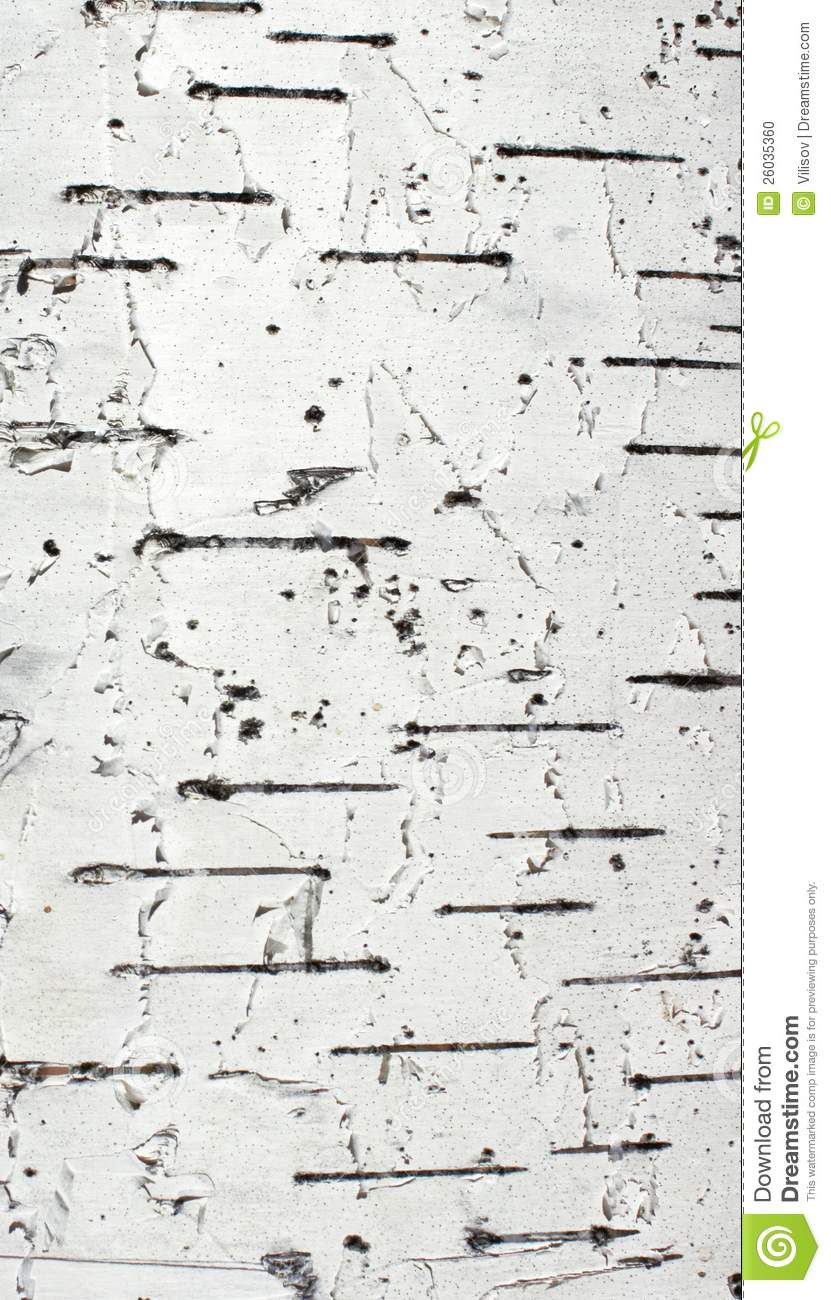 Black And White Tree Trunk Wallpaper Birch Trunk Clipart 20 Free Cliparts Download Images On