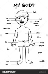 body clipart human chest cartoon cliparts clipground whole educational info hands webstockreview