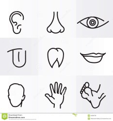 body parts clipart head human nose eyes mouth tongue foot lips ear clipground teeth leg arm icons flat educational info