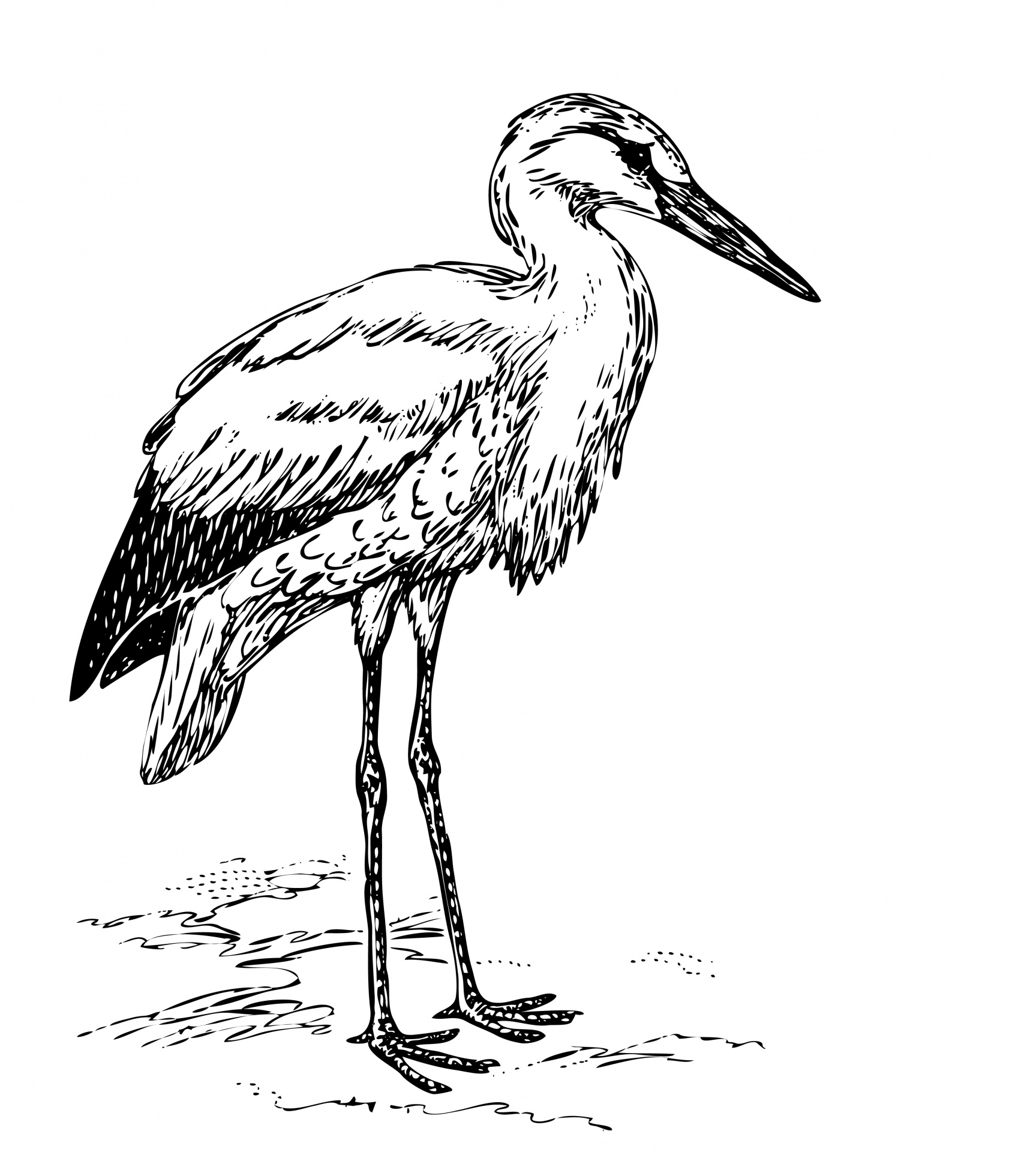 Black Stork Clipart 20 Free Cliparts