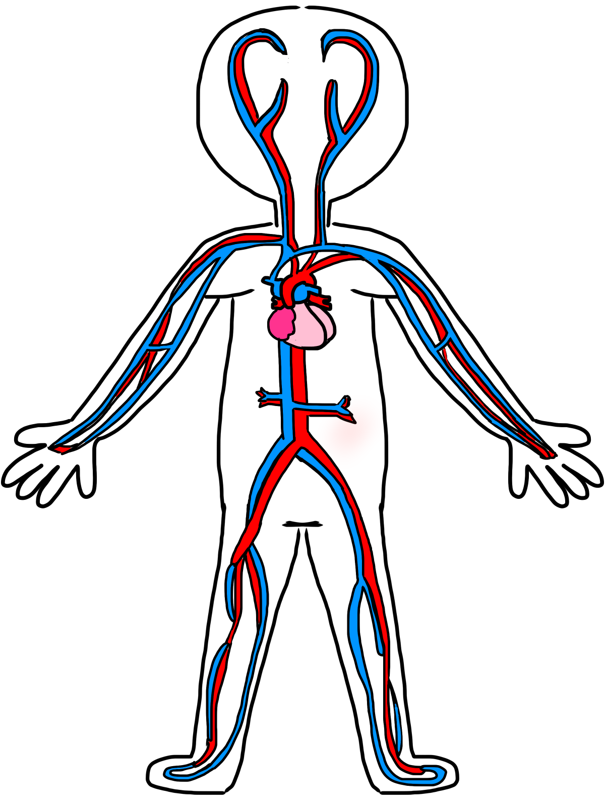 Blood Circulation Clipart