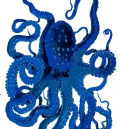 blue octopus [ 1850 x 2400 Pixel ]