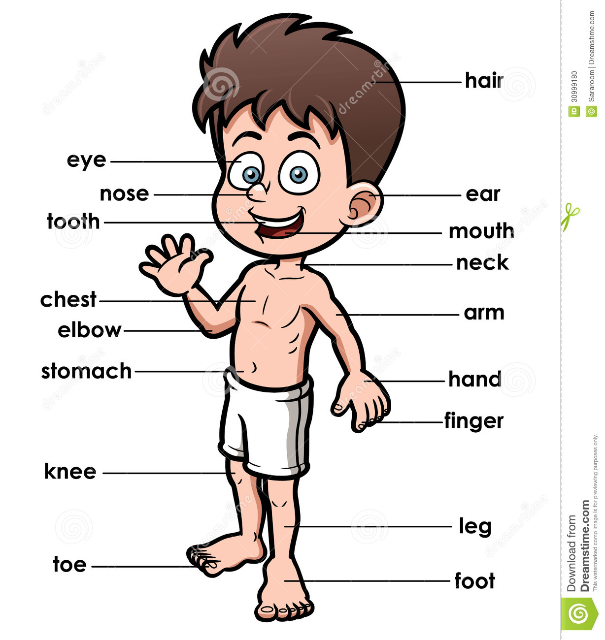 Part Of The Body Clipart