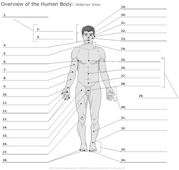anterior heart diagram unlabeled 4 switch wiring body regions clipart for ap - clipground